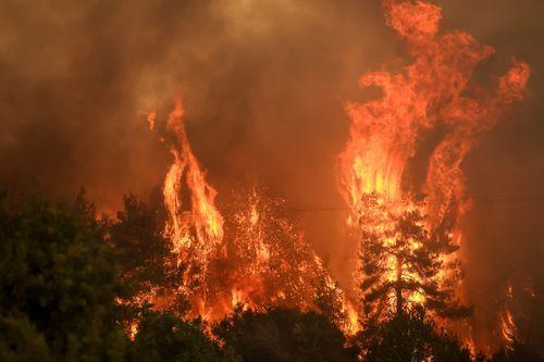 Η Θύρα 13 στηρίζει τους πληγέντες των πυρκαγιών! (pic) - πράσινος τύπος
